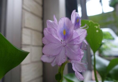 鹿児島スター俱楽部よしの 外 花